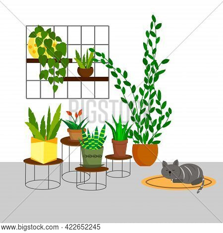 Green Plants In Pots In The Home Interior. Flowers And Plants Home Garden. Vector Illustration. For