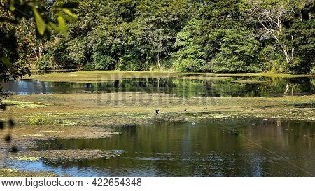 A Cormorant Drying Itself In Wetlands At Botanic Gardens On A Bright Sunny Morning