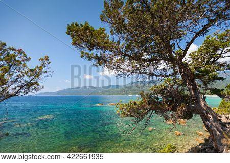 Pine Trees Grow On Coast Of Cupabia Beach. Coastal Landscape Of Corsica Island On A Sunny Summer Day