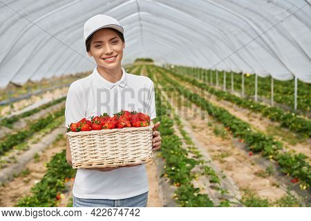 Positive Young Woman Holding Wicker Basket With Ripe Strawberries While Standing At Greenhouse. Fema