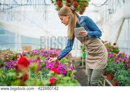 Woman Is Working In Small Business Greenhouse Store. She Is Examining Plants. Female Entrepreneur.