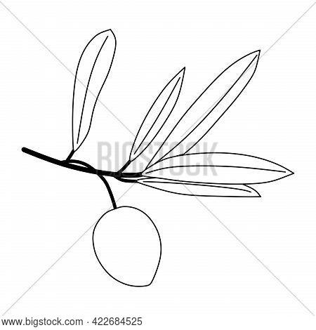 Illustration Vector Of Olive Fruit. Olive Icon Isolated On White Background. Olive Symbol