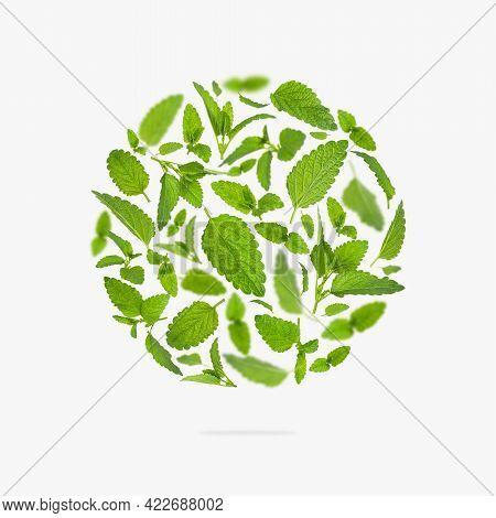Fresh Flying Green Mint Leaves, Lemon Balm, Melissa, Peppermint Form Of Circle On Light Background F