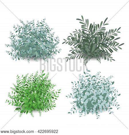 Set Of Green Garden Shrub Bushes. Nature Green Seasonal Growth Grass, Botanical Greens, Herbs And Le