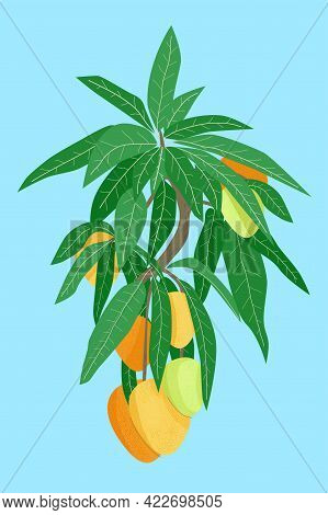 Mango Fruit Tree Branch With Foetus And Leaves On Blue Background. Hand Drawn Orange And Green Vecto