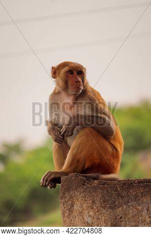 Monkey Sitting On The Wall ,  Funny Monkey