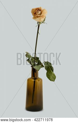 Dried white rose in a brown glass vase
