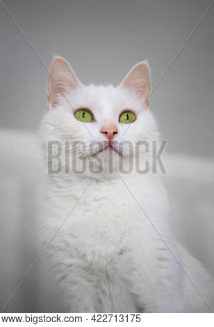 Portrait Of Green-eyed White Angora Cat With Character