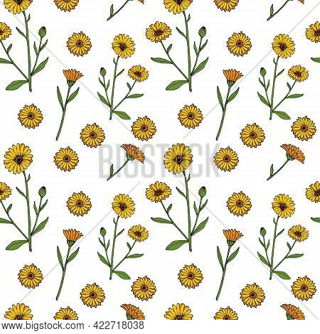Seamless Pattern With Common Marigold Calendula Officinalis , Medicinal Plant, Vector Illustration