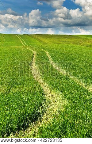 Grain Field With Tractor Tracks In The Growing Crop. The Tractor Tracks In A Green Cereal Field In S