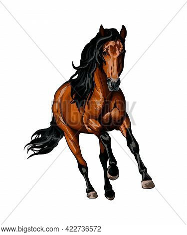 Horse Running At A Gallop From Splash Of Watercolors, Colored Drawing, Realistic. Vector Illustratio