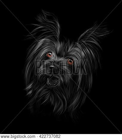 Head Of Yorkshire Terrier On Black Background. Vector Illustration Of Paints