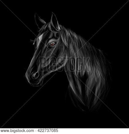 Horse Head Portrait On Black Background. Vector Illustration Of Paints
