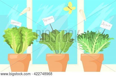 Fresh Salad Leaves In Pots Cartoon Illustration. Lettuce, Spinach And Frisee In Brown Vessels At Win