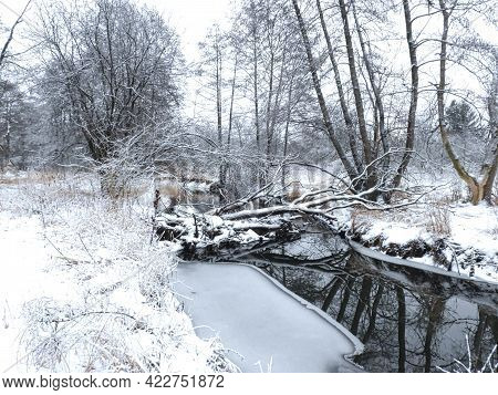 Fallen, Snow Covered Trees Over a River: Trees lay over a river on a winter day, snow covered from a fresh snow fall as ice builds along the bank