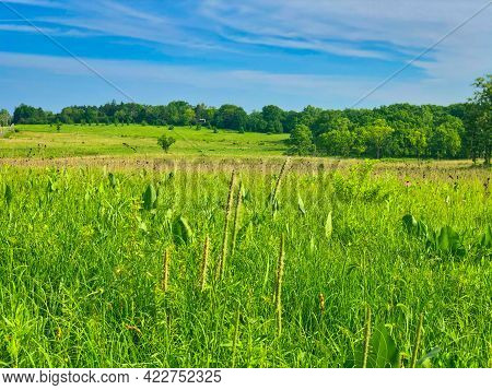 Field And Sky: Summer On The Prairie With A Brilliantly Green Meadow And Blue Sky With Hints Of A Wo