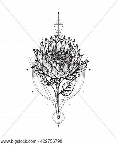 Vector Illustration Of Black And White Protea Flower, Sacral Geometric Simbols Isolated On White Bac