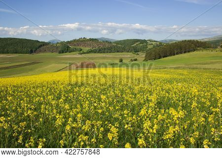 Cultivation Of Lentils In Colfiorito During Spring Day Of Sun In Umbria