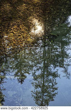 Mirrored Trees In Creek, Velky Sokol Gorge, Slovak Paradise National Park. Seasonal Natural Scene.