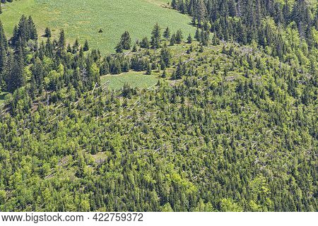 Calamity In The Forest, Little Fatra Mountains, Slovak Republic. Deforestation Theme. Seasonal Natur