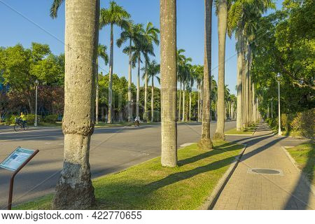 Taipei, Taiwan - Aug 8, 2018 : Palm Tree Leading To National Taiwan University At Twilight Time In T