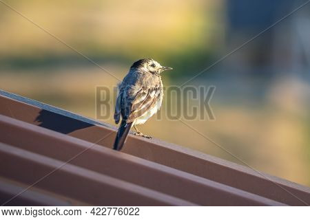 Small Bird Perching On Metal Building Roof.