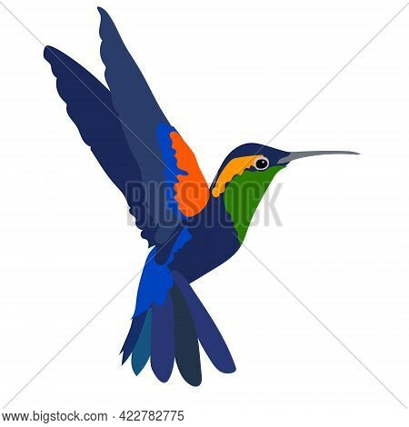 Small Tropical Hummingbird With Long Thin Beak And Bright Blue Feathers On White Background. Wildlif