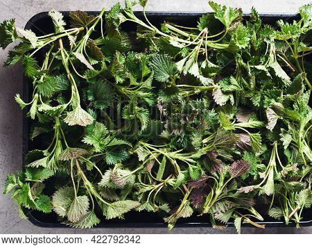 Cut Fresh Leaves Of Nettle Close-up, Top View.