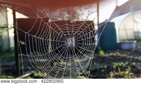 Cobwebs In The Trees. The Spider Weaves A Beautiful Web On The Branches Of A Tree In The Garden In T