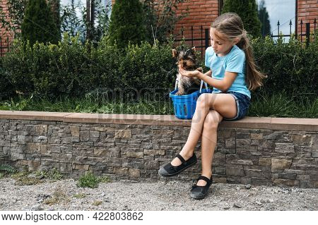 Outdoor Portrait Of Cute Yorkshire Terrier Puppy In Basket And Preteen Girl. Liitle Girl Holding Dog