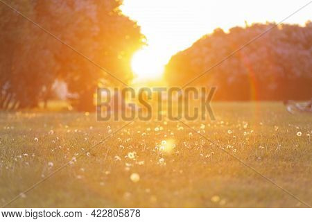 Sunset In The Park With Lush Greenery. Summer Evening Outdoors. People Are Enjoying The Sunset. Peop