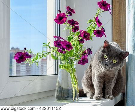 Beautiful Petunia Flowers And A Cute Gray Cat On The Windowsill. Summer Mood