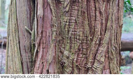Tree Trunk With Coarse Textured Wood Bark In Various Colours