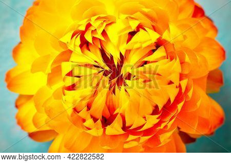 Layout Made Of Flowers And Leaves. Nature Concept. Floral