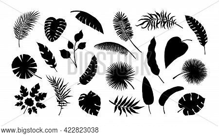 Exotic Leaf Silhouette. Tropical Monstera And Banana Tree Branches. Black And White Coconut Palm Fro
