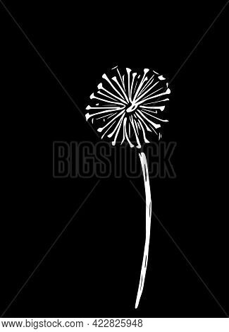 Abstract Vector Illustration Of A Dandelion. Modern Floral Art Isolated On A Black Background.