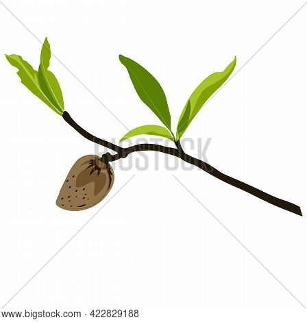 Almond Branch With Flowers Vector Stock Illustration. Spring Fresh Greenery On The Tree And Pink Bud