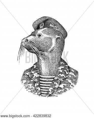 Fur Seal Man In Military Uniforms. Marine Mammal. Fashion Animal Character. Hand Drawn Sketch. Engra