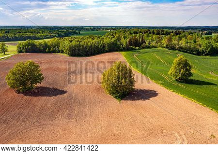 Aerial View On Trees In The Middle Of A Cultivated Agricultural Field On The Edge Of A Forest, Field