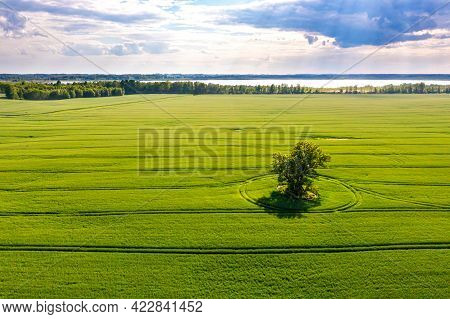 View From Above On Lonely Tree With Shadows In A Green Field And Forest In The Background