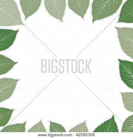 frame with green leaf