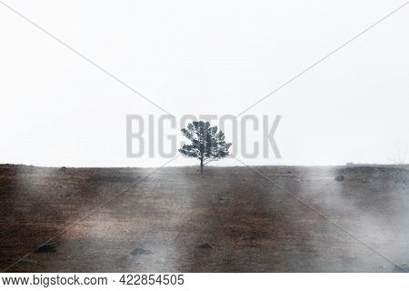 Lonely Pine Tree On The Hill Against The Sky In Misty Morning. Baikal Lake, Siberia, Russia. Beautif