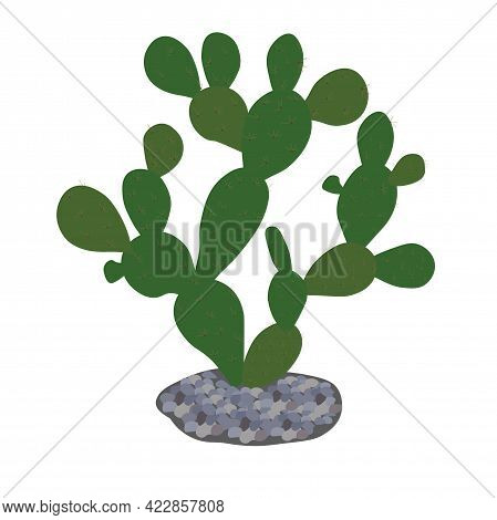 Prickly Pear Cactus Vector Stock Illustration. Prickly Leaves Of Desert Succulents Close-up. The Mex