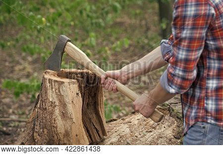 Cutting Some Firewood. Chopping Wood. Wood Chopper In Male Hands. Lumbermans Equipment. Forestry Log