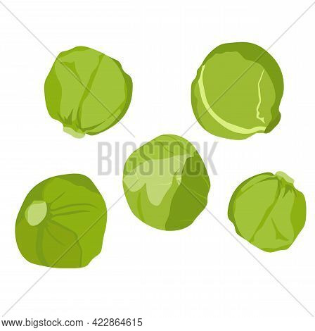 Brussels Sprouts Vector Stock Illustration Close - Up. Green Cabbage With Round Cauliflower Leaves.
