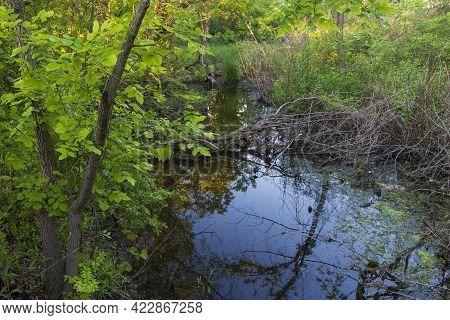 Wetlands Habitat At Wentworth Park West St Paul Minnesota