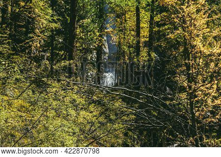Scenic Alpine View Through Yellow Leaves To Beautiful Waterfall Among Rocks In Sunny Autumn Forest.