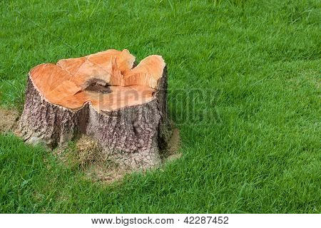 Stump Tree Plant On Green Field