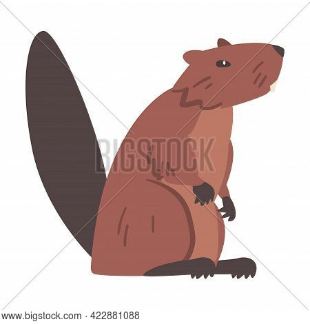 Brown Beaver, Side View Of Wild Rodent Animal Cartoon Vector Illustration