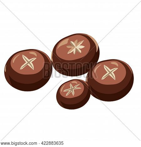 Vector Illustration Of A Set Of Small Brown Round Black Shiitake Tree Mushrooms. Korean, Chinese, Ja